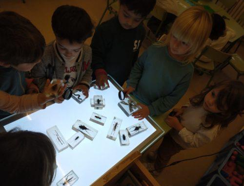P3: Ens agrada observar i fer contruccions amb la taula de llum